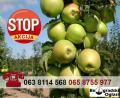 Prodaja i PROIZVODNJA sadnica 100% tačne sorte