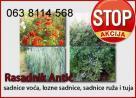 Akcija! Prave Sadnice raznih vrsta i za vašu baštu i vrt