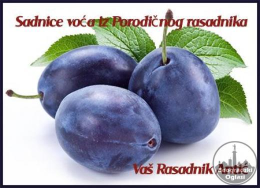 ○ Voćne sadnice iz Porodičnog rasadnika, Provereno!