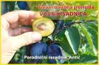 Neverovatna ponuda sadnica voća za 2015