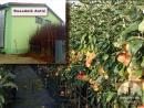 Obezbedite kvalitetne sadnice voća OVDE