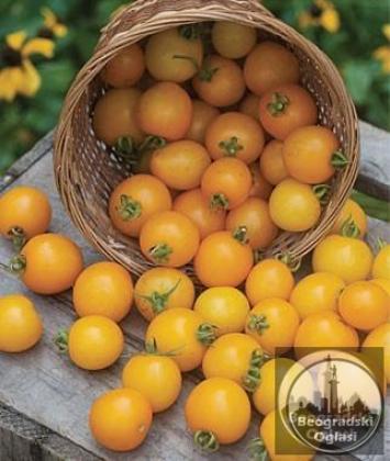 Balkonski zuti ceri paradajz