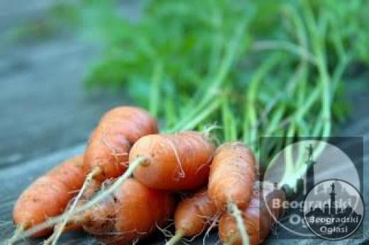 Bebi sargarepa NANTES organsko seme