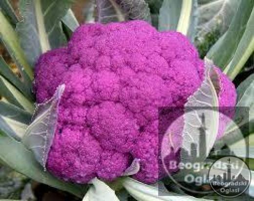 Karfiol SICILIJA organsko seme