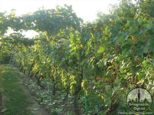 Na prodaju vikendica sa vocnjakom i vinogradom CENA: 10.000EUR