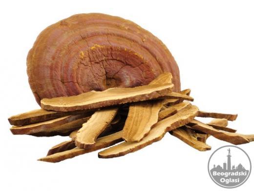Reishi - ganoderma lucidum