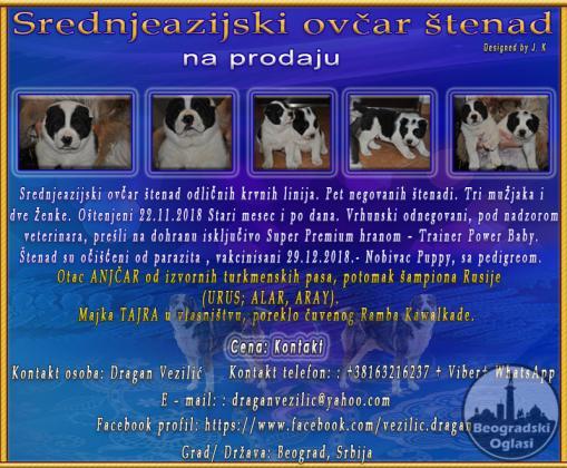 Srednjeazijski ovčar štenad