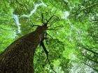 Šuma hrastova odrasla 13,5 ha, sa dve stare katast. ucrrtane kuće