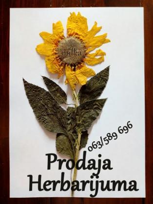 Herbarijum-Korovi,lekovite biljke,žitarice, mahovine,paprat..