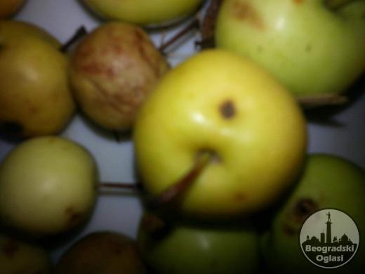 Divlja jabuka seme