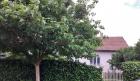 Prodajem prelepu kucu u mirnom kraju CENA: 17.500EUR