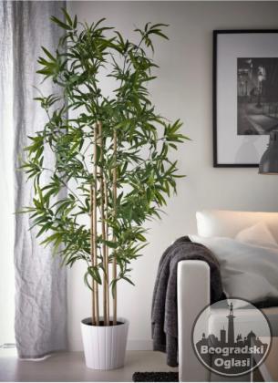 Bambus stap -Cvece - cuvar ljubavi i srece