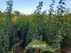 Vocne sadnice za jesen 2021
