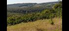 Plac 86a iza Avale, Ripanj, put za Markoviće